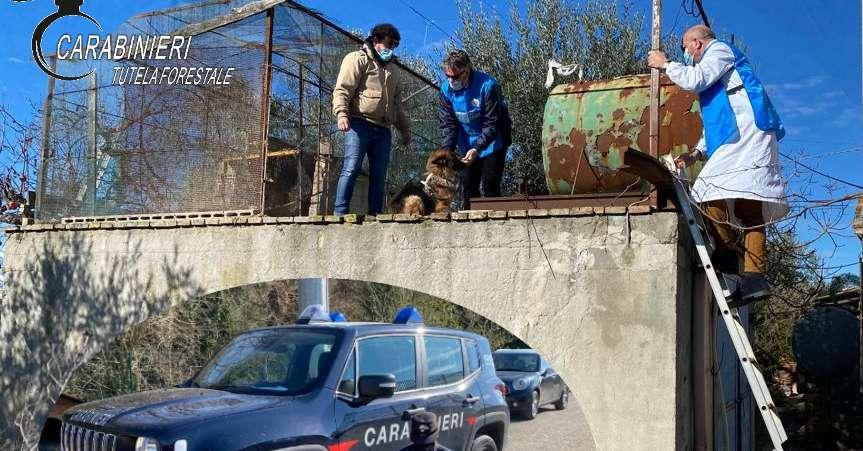 cane-imprigionato-nella-voliera-a-oltre-tre-metri-da-terra