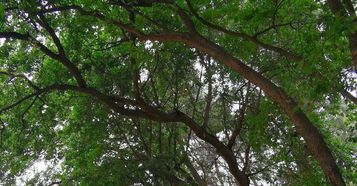 via-pantini,-masci-rilancia:pianteremo-mille-alberi