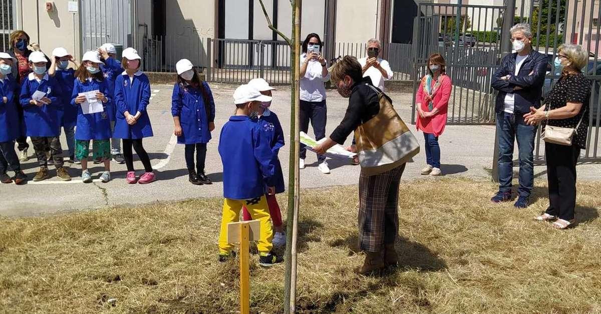 nuovi-alberi-alla-scuola-di-via-verdi