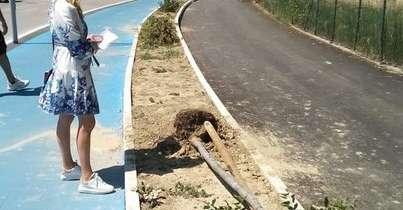 silvi,-vandali-abbattonogli-alberi-appena-piantati