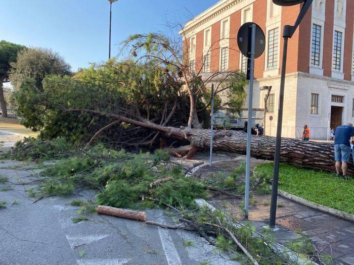 pescara:-cade-albero-davanti-al-municipio,-tragedia-sfiorata