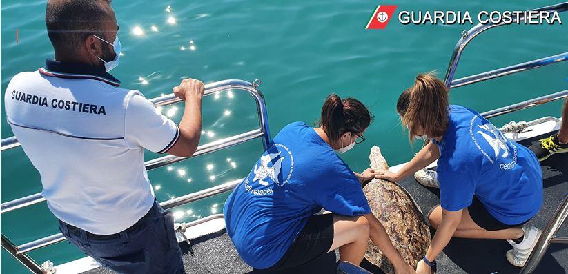foto-|-guardia-costiera-giulianova-e-centro-studi-cetacei-pescara-rilasciano-in-mare-due-esemplari-di-tartaruga