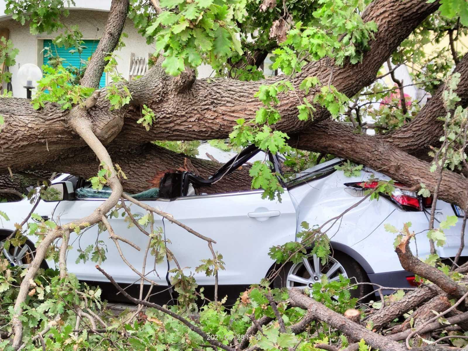 foto-e-video-|-pineto,-cade-una-quercia-a-borgo-santa-maria:-un-mezzo-distrutto-ma-nessun-ferito
