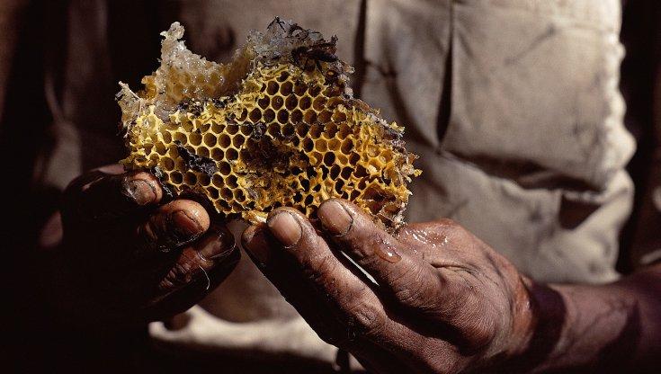 clima-impazzito:-e-allarme-api.-addio-a-un-vasetto-di-miele-su-quattro-'made-in-italy'