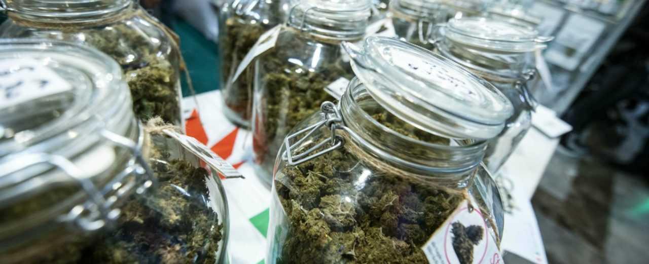 referendum-legalizzazione-cannabis,-si-attiva-anche-teramo-dopo-l'eutanasia-legale