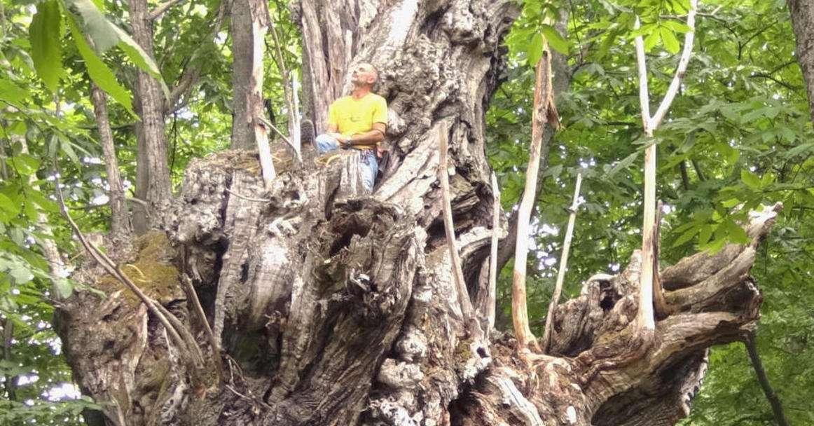 castagno-monumentale-in-finaleper-l'albero-italiano-dell'anno